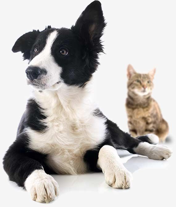 Produits naturels pour chien et chat - Aloe vera