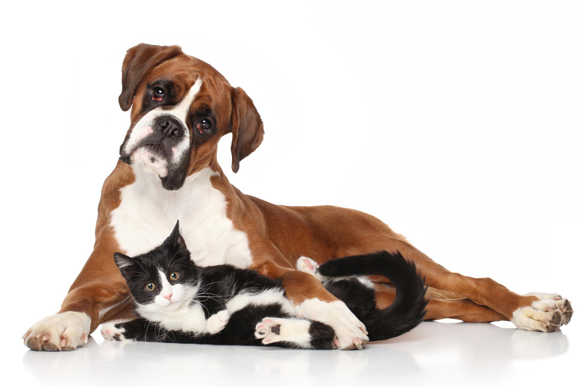 Produits de soins à l'aloe vera pour les chiens et chats