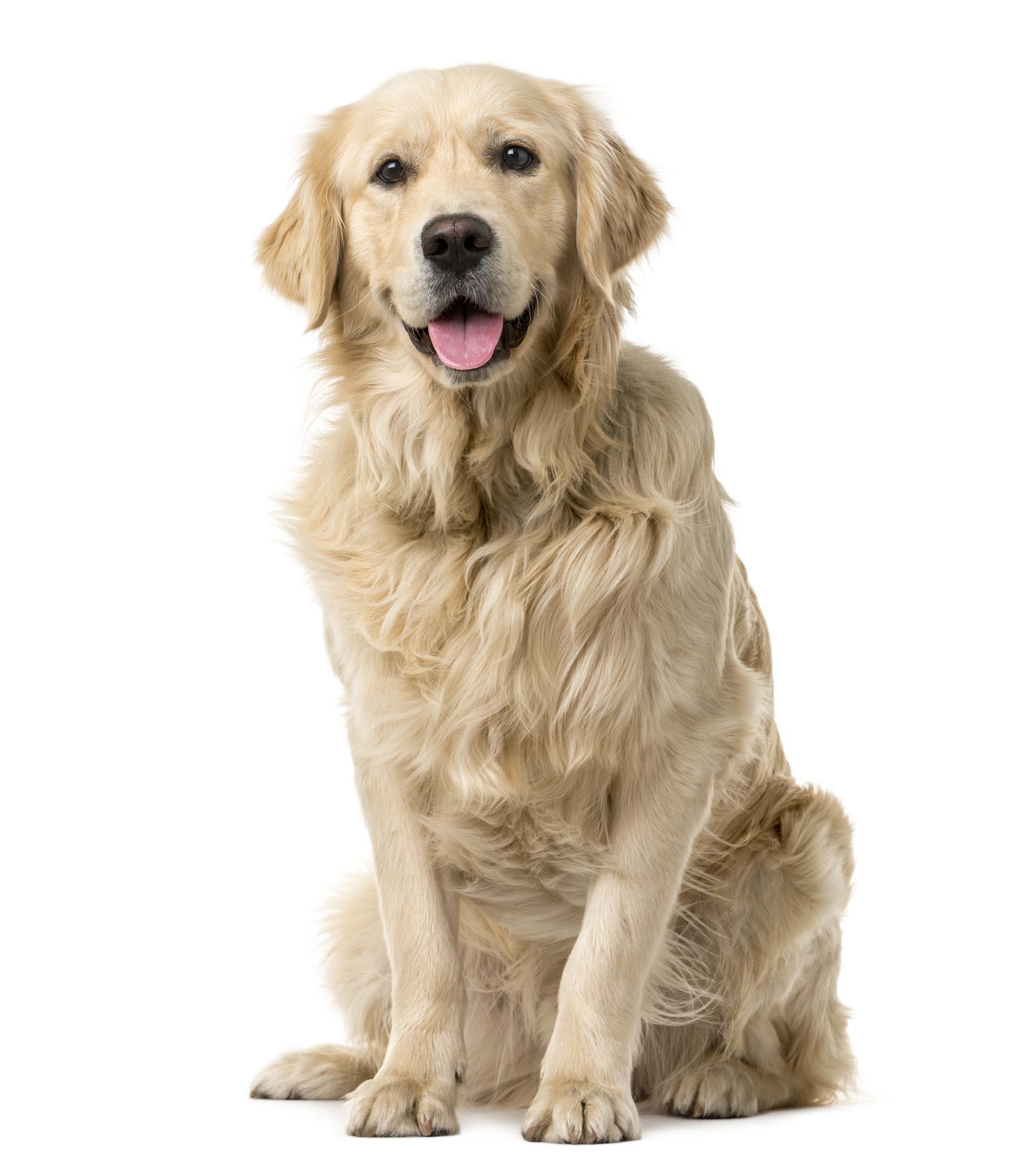 Qu 39 est ce que l 39 aloe vera pour les chiens et chats - Produit pour empecher les chiens d uriner ...