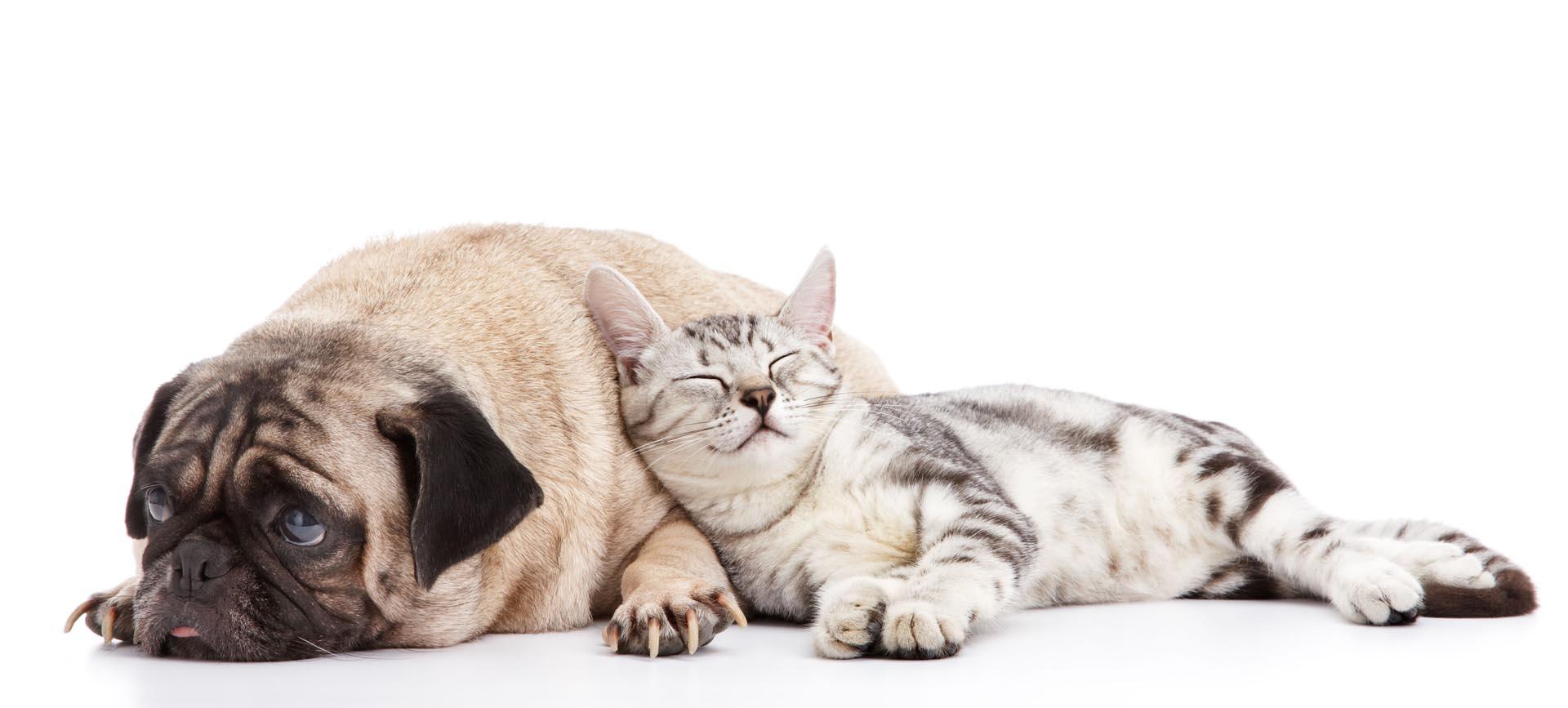 Soigner son chat / chien avec de l'aloe vera