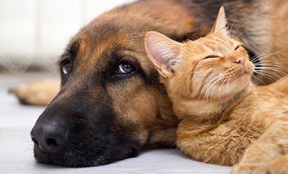 Retrouvez les produits naturels à l'aloe vera pour les chiens et chats